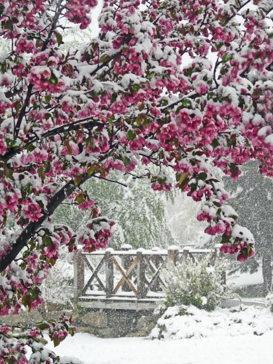 50 fotografii de primăvară superbe